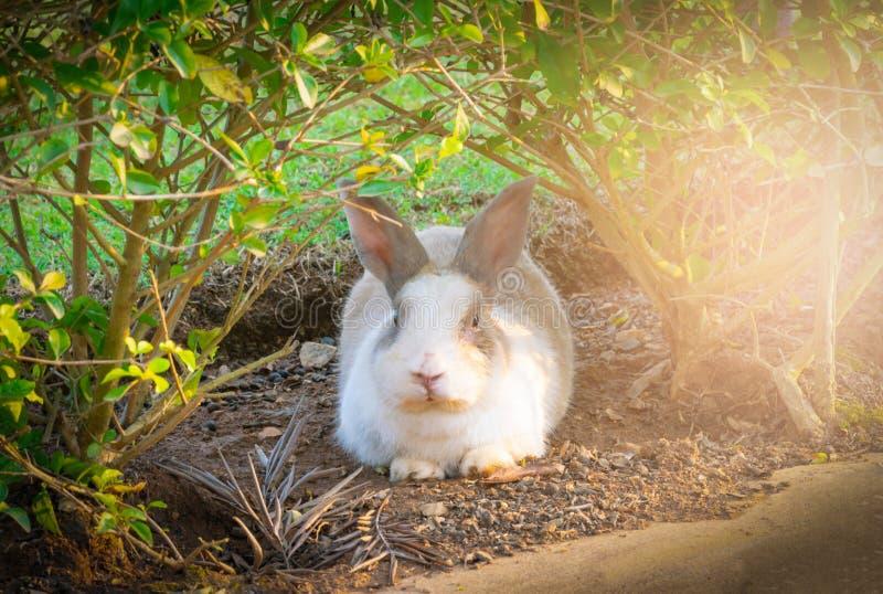 кролик зеленого цвета травы маленький стоковые фото