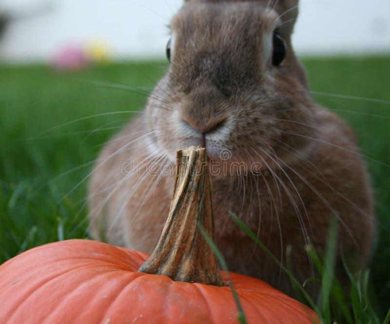Кролик и тыква стоковая фотография