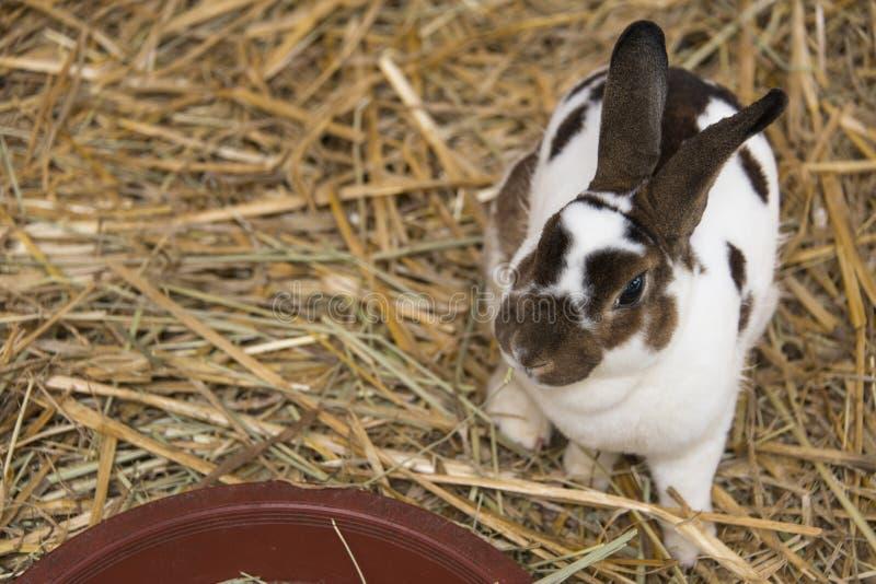 Кролик любимчика стоковые изображения rf