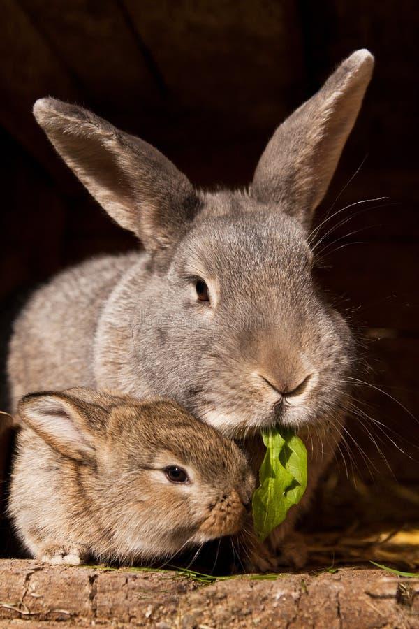 кролик мумии малый стоковая фотография