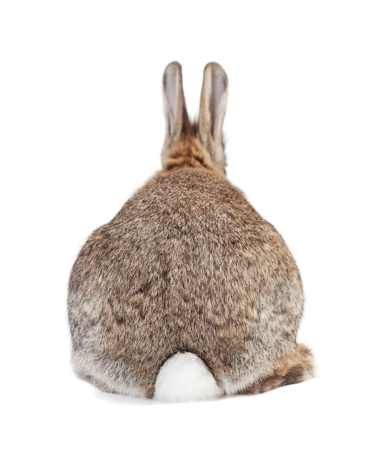 Кролик от позади стоковые фотографии rf