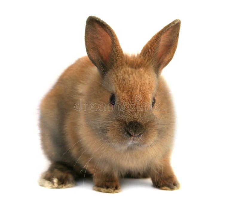 Download кролик пасхи стоковое изображение. изображение насчитывающей усаживание - 4555051