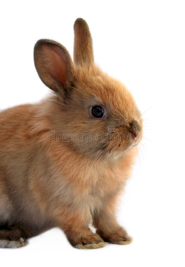 Download кролик пасхи стоковое фото. изображение насчитывающей отлично - 4555316