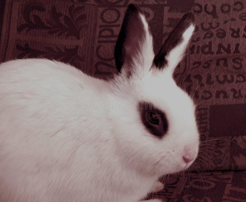 Download кролик пасхи стоковое фото. изображение насчитывающей tame - 493584