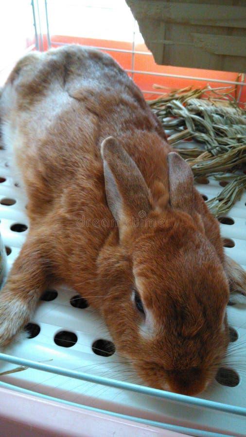 Кролик спать стоковая фотография rf
