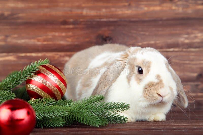 Кролик с ветвями ели стоковая фотография
