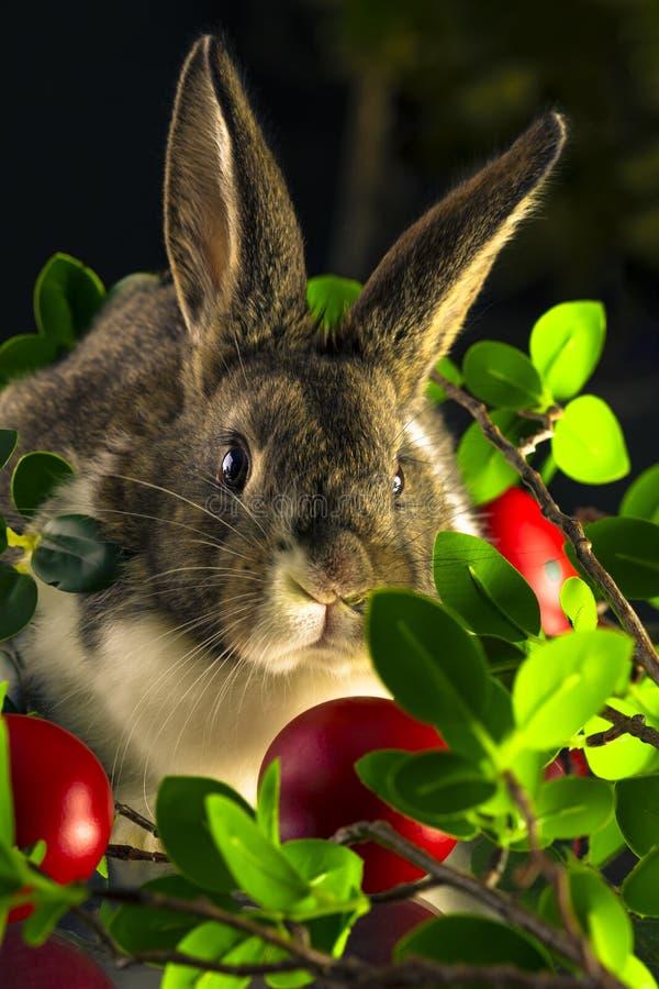 Кролик с красными пасхальными яйцами стоковое фото rf