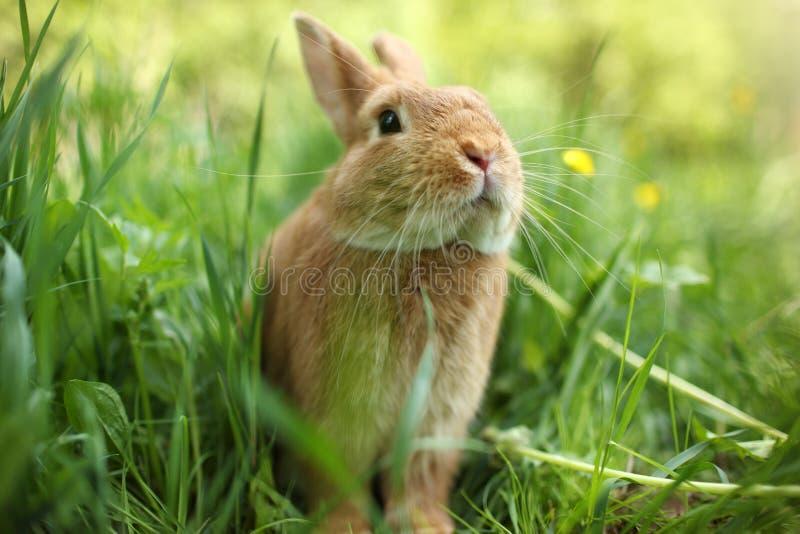 кролик стоковая фотография rf