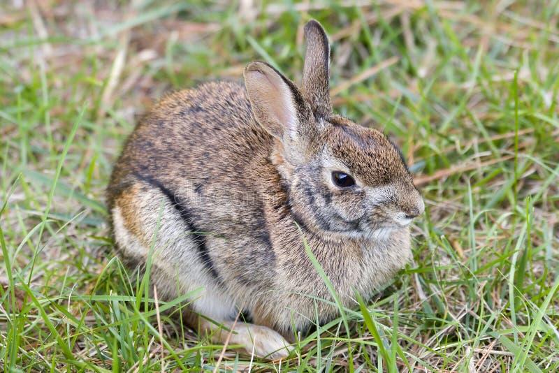 кролик стоковая фотография