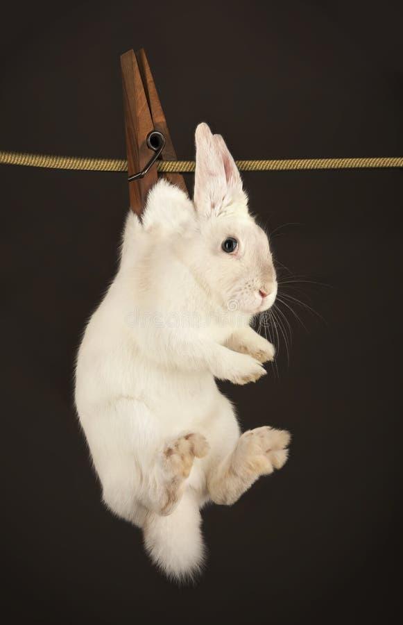 кролик clothesline вися стоковое фото