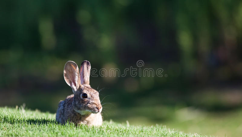 кролик jack младенца стоковое фото