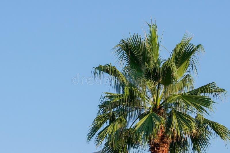Крона пальмы против голубого неба лета Windless погода стоковое фото