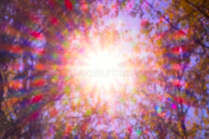 Кроны разнообразия леса деревьев весной против голубого неба с солнцем Нижний взгляд деревьев, свет rad Солнца природы стоковые фото