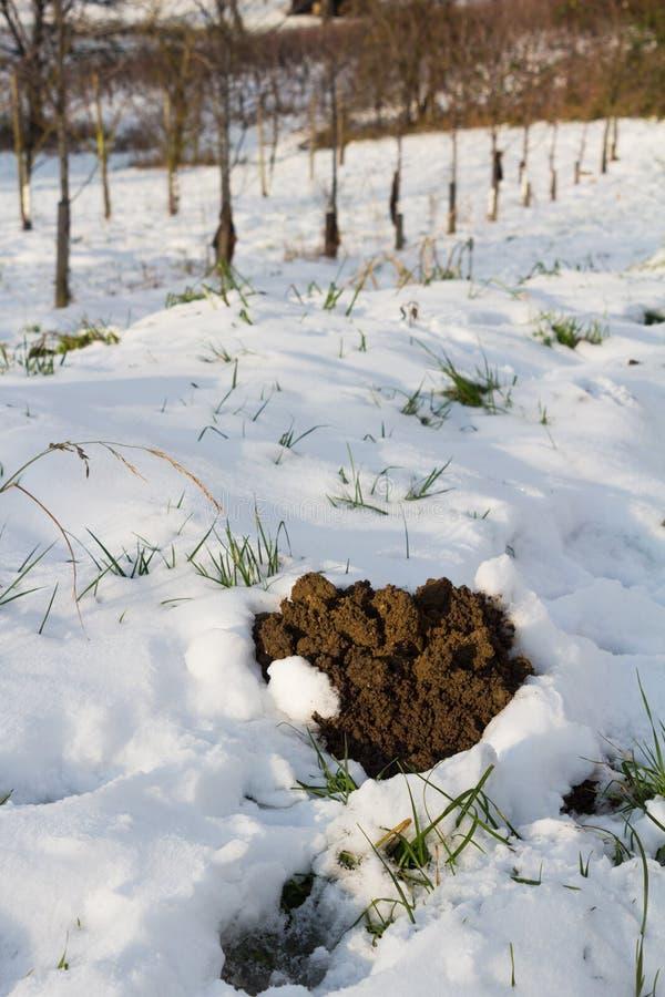 Кротовина зимы в снежных виноградниках в Баден стоковые фотографии rf