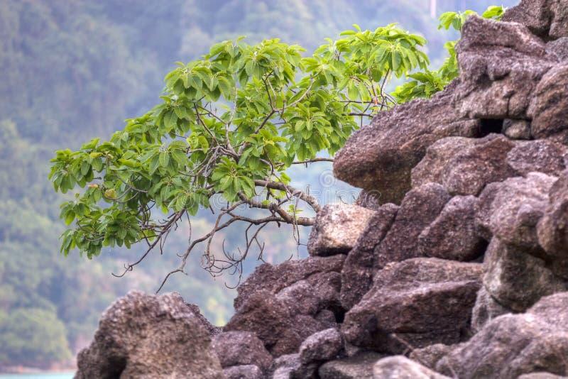 кроша вал roc мангровы стоковые фото