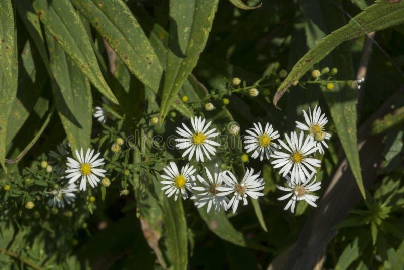 Крошечные белые цветки в цветени стоковое изображение