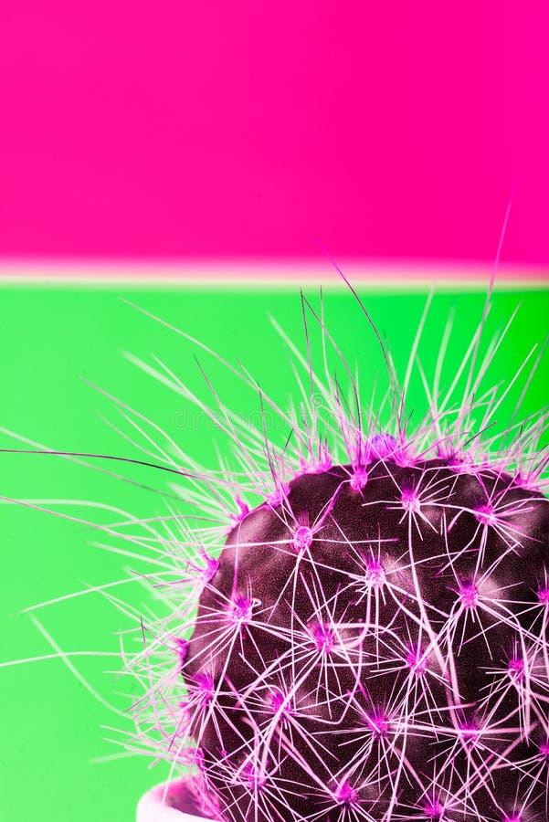 Крошечный кактус в баке на яркой неоновой предпосылке Насыщенное Imag стоковое фото
