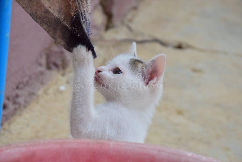 Крошечный котенок играет с старой ветошью стоковые фото