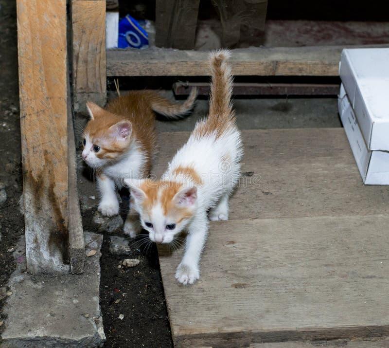 Крошечный красный рассеянный котенок 2 стоковое изображение