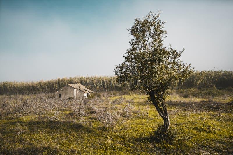 Крошечный оставлятьый дом в поле стоковые изображения