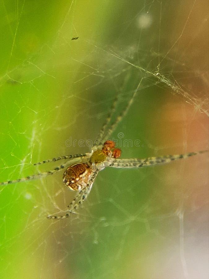 Крошечный паук на сети стоковая фотография rf