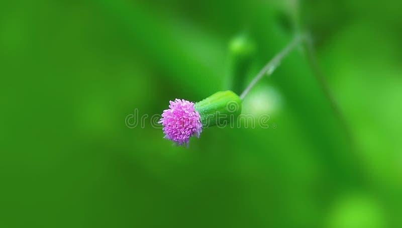 Крошечный фиолетовый цветок в саде стоковое изображение rf