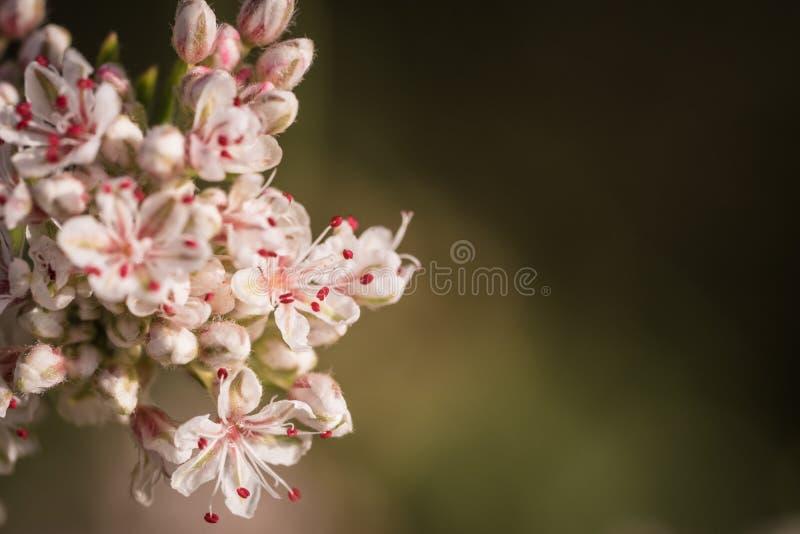 Крошечный Wildflower с отрицательным космосом стоковая фотография rf