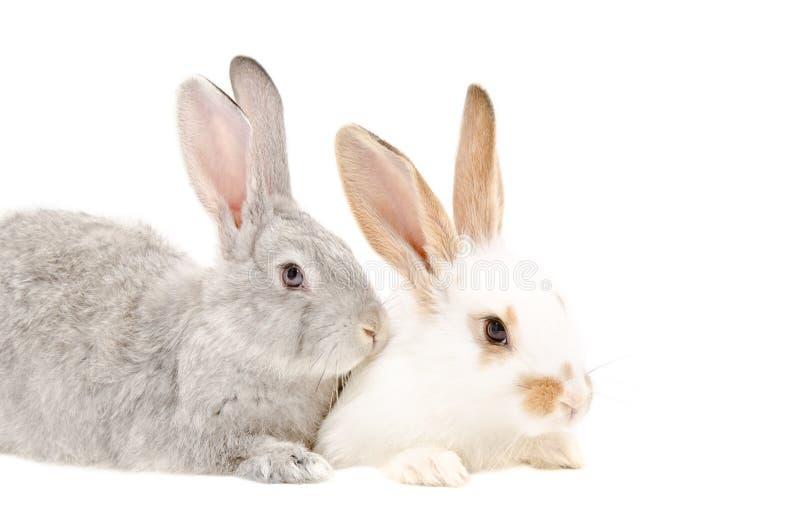 свадьбе два кролика сидят друг на друге картинки что