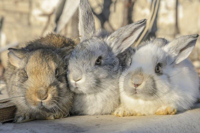 Кролики дерева маленькие стоковая фотография