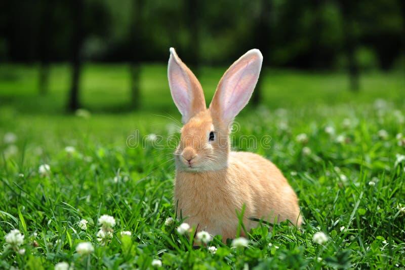 Кролик Брайна стоковая фотография