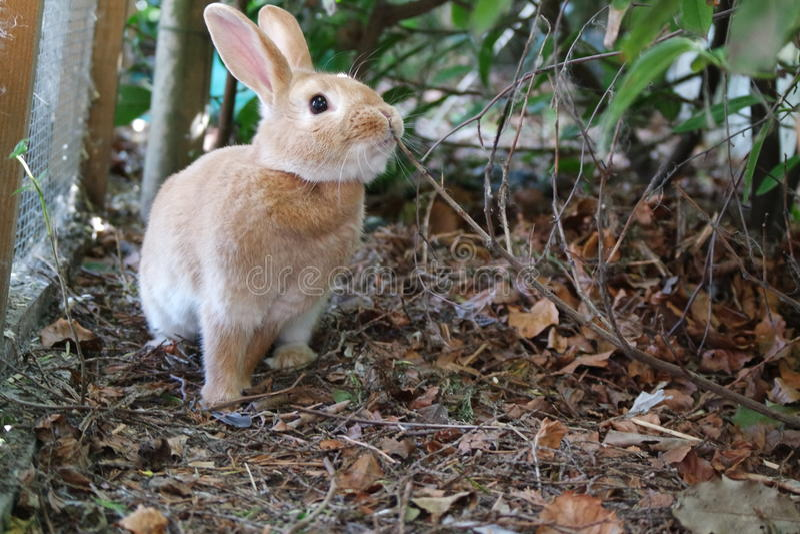 Кролик в окрестностях стоковое фото