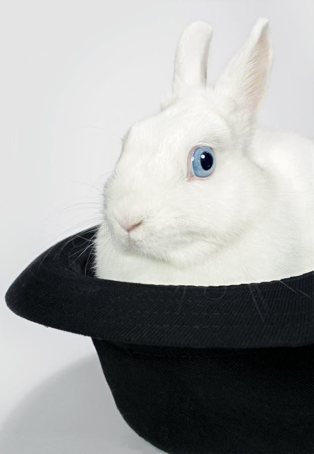 Download Кролик в шляпе стоковое изображение. изображение насчитывающей внутрь - 37929843
