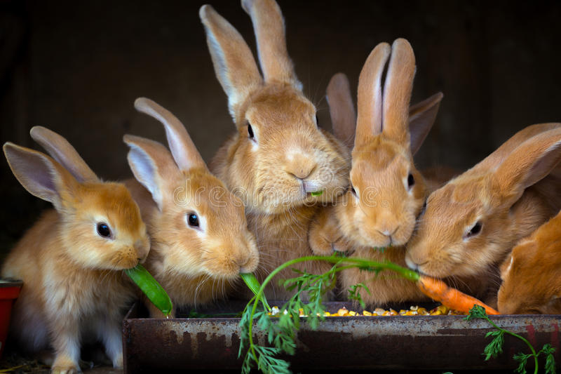 Кролик и малые кролики стоковые изображения rf