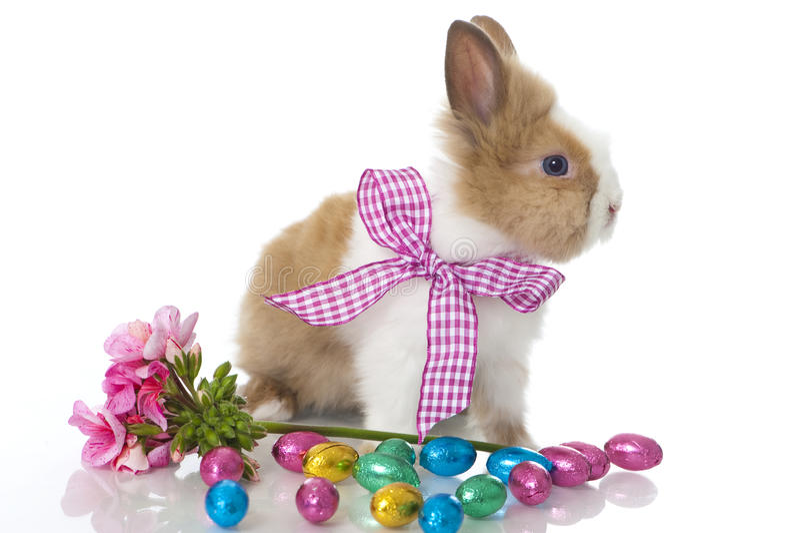 Кролик карлика стоковое изображение