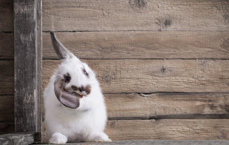 Кролик на деревянной предпосылке стоковое изображение rf