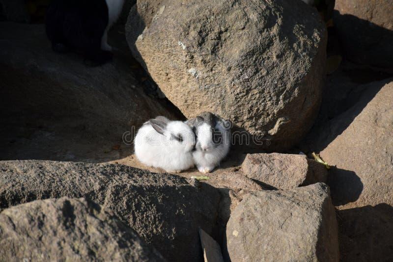 Кролик на камне в виске Wat Phukwaingern стоковое изображение