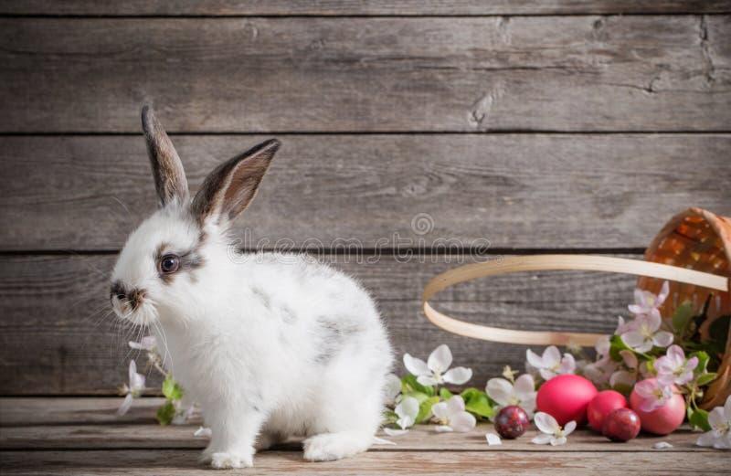 кролик пасхальныхя стоковое изображение rf