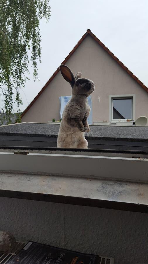 Кролик приключения стоковое изображение rf