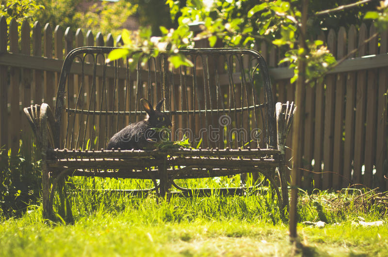 Кролик сидя на стенде стоковое изображение