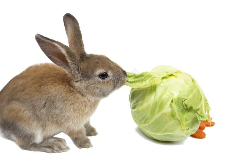 все, картинка кролик капусту есть это