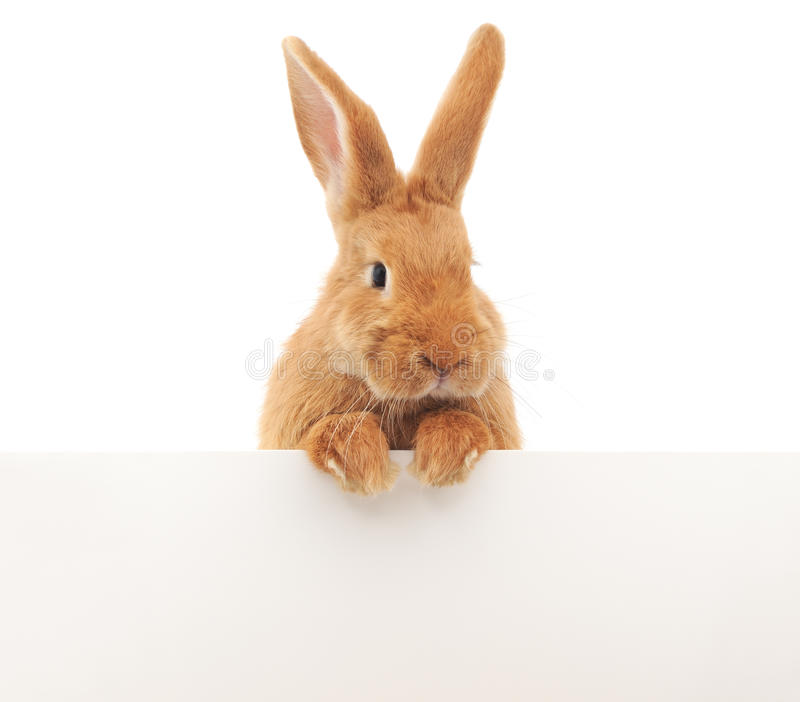 Кролик с пробелом стоковые изображения