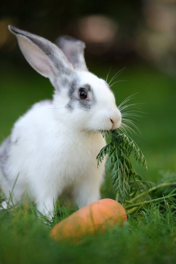 Download Кролик стоковое фото. изображение насчитывающей шарм - 33735652