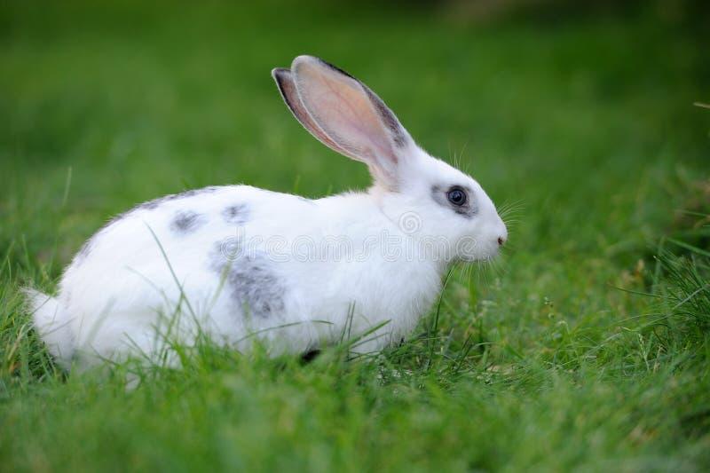 Download Кролик стоковое фото. изображение насчитывающей кролик - 33735656