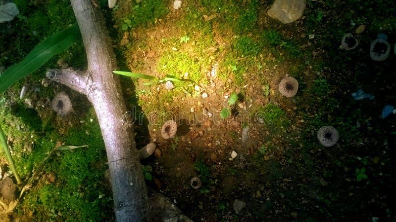 Круги гриба в солнечном свете стоковое фото rf