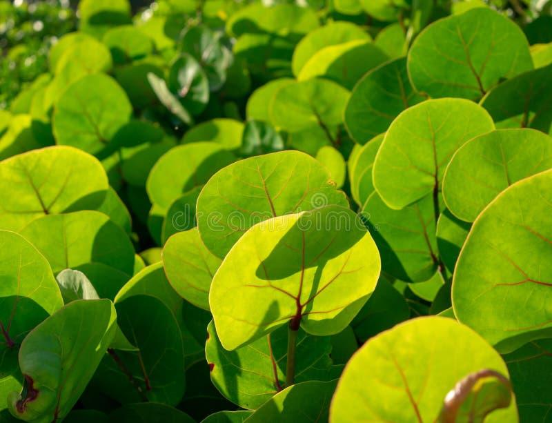 Круглая зеленая текстура листьев стоковое фото