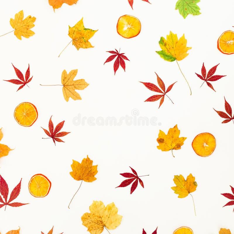 Круглая рамка сделанная кленовых листов падения и высушенного цитруса на белой предпосылке Плоское положение, взгляд сверху стоковое изображение