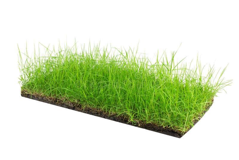 Круглое поперечное сечение земли почвы с землей земли и зеленой травой стоковые изображения