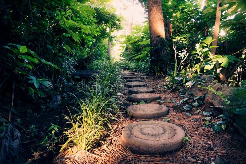 Круглые камни вдоль тропы через лес, Согвипхо Olle, острова Jeju, Кореи стоковая фотография rf