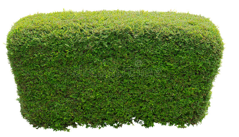 Круглый bush стоковые изображения