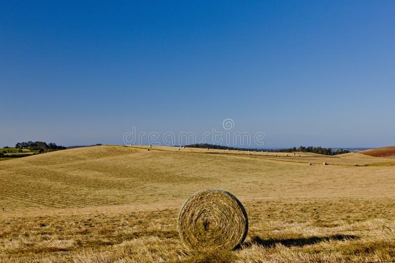 Круговая связка сена в поле стоковые фото